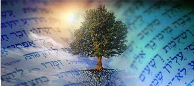 arbre torah bon fruit 650PX