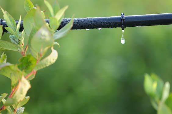 irrigation goutte a goutte israel modif