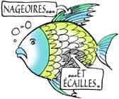 poisson cachere ecaille nageoire torah yeshoua