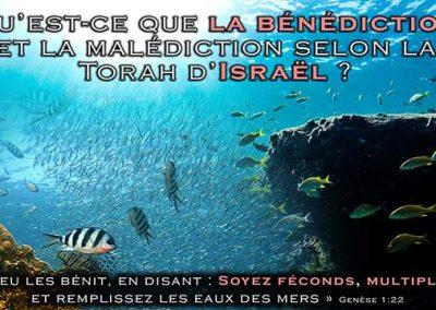 Qu'est-ce que La vraie bénédiction et malédiction selon la Torah d'Israël ? Paracha 'Haye Sarah
