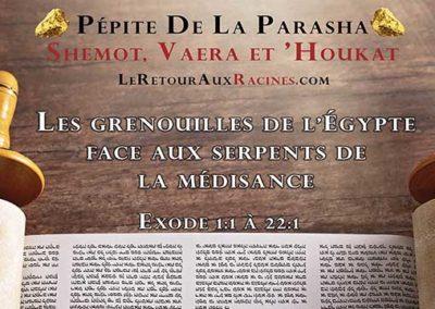 Les grenouilles de l'Egypte face aux serpents de la médisance (Parasha Shemot, Vaéra et 'Houkat)